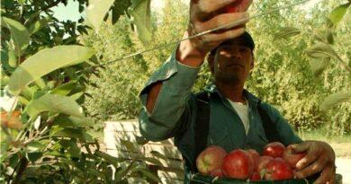 Creció la venta de frutas: «La gente asoció el cuidado ante la enfermedad con un consumo más sano»